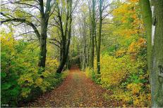 林道整備 イメージ