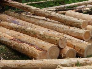 3.5.2エネルギー用木材収穫3